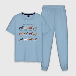 Пижама хлопковая мужская HORSE BREEDING цвета мягкое небо — фото 1