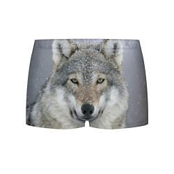 Трусы-боксеры мужские Милый волк цвета 3D — фото 1